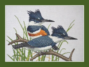 Belted Kingfisher cross stitch design